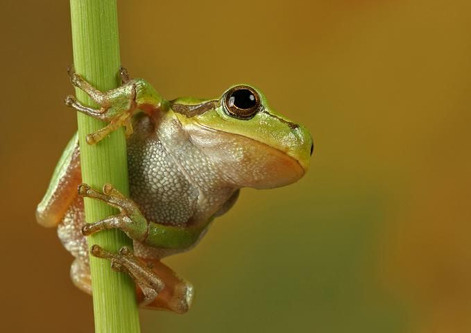 Cute Frog New Photos 679x480