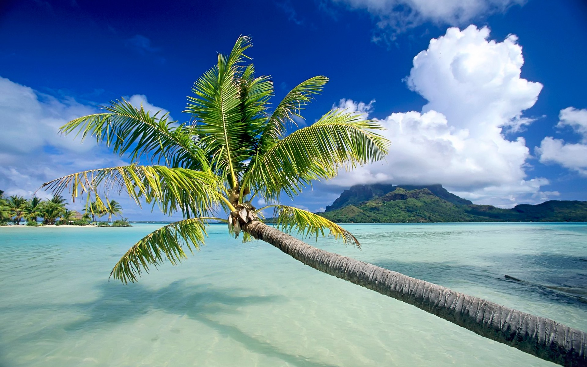 Bora Bora Palm and Clouds Wallpaper   Travel HD Wallpapers 1920x1200