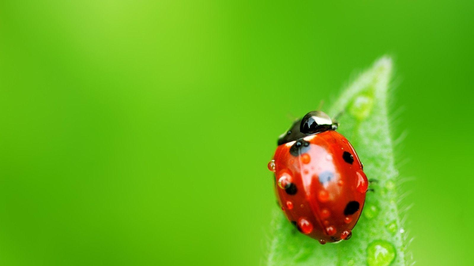 Bugs Wallpapers   Top Bugs Backgrounds   WallpaperAccess 1600x900