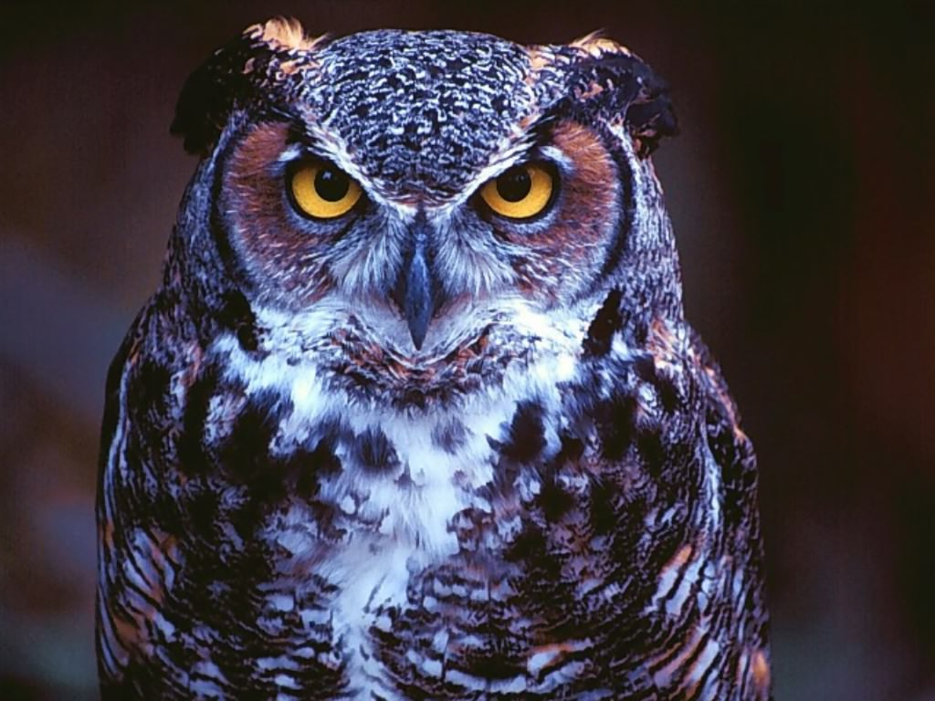 Beautiful Wallpapers Owl Wallpaper 1024x768