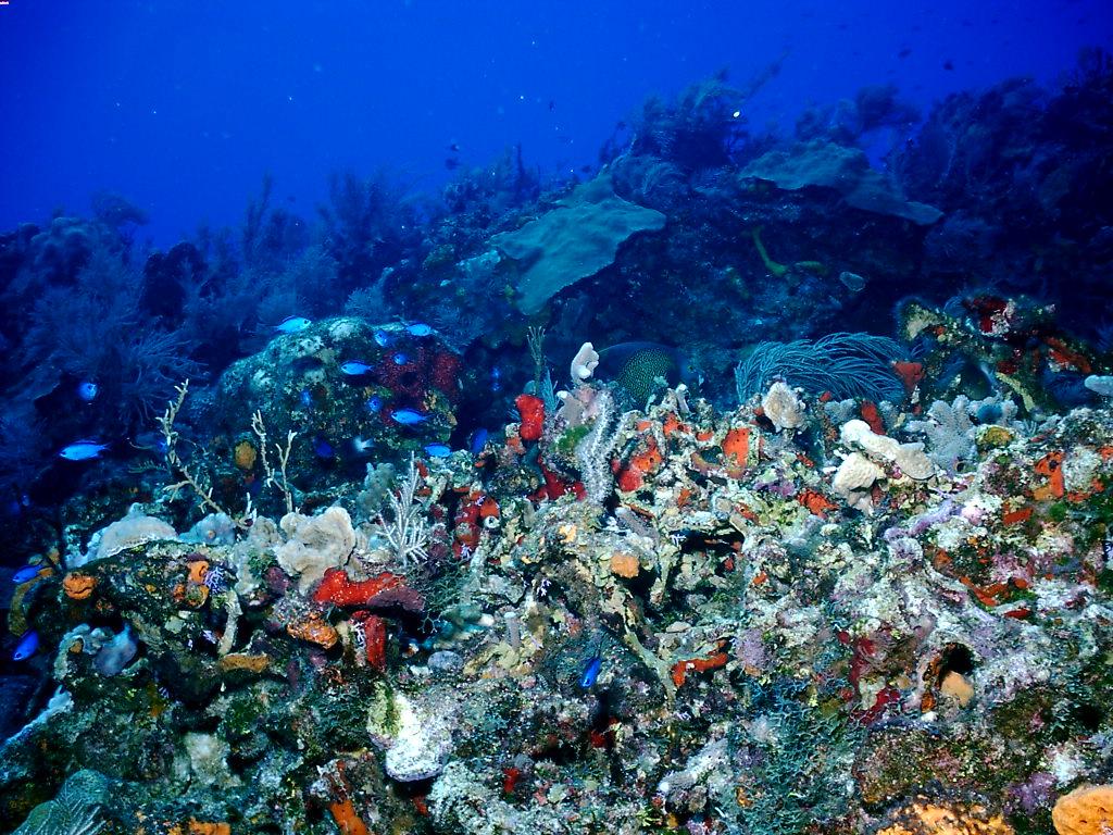 Coral reef background wallpaper wallpapersafari - Great barrier reef desktop background ...