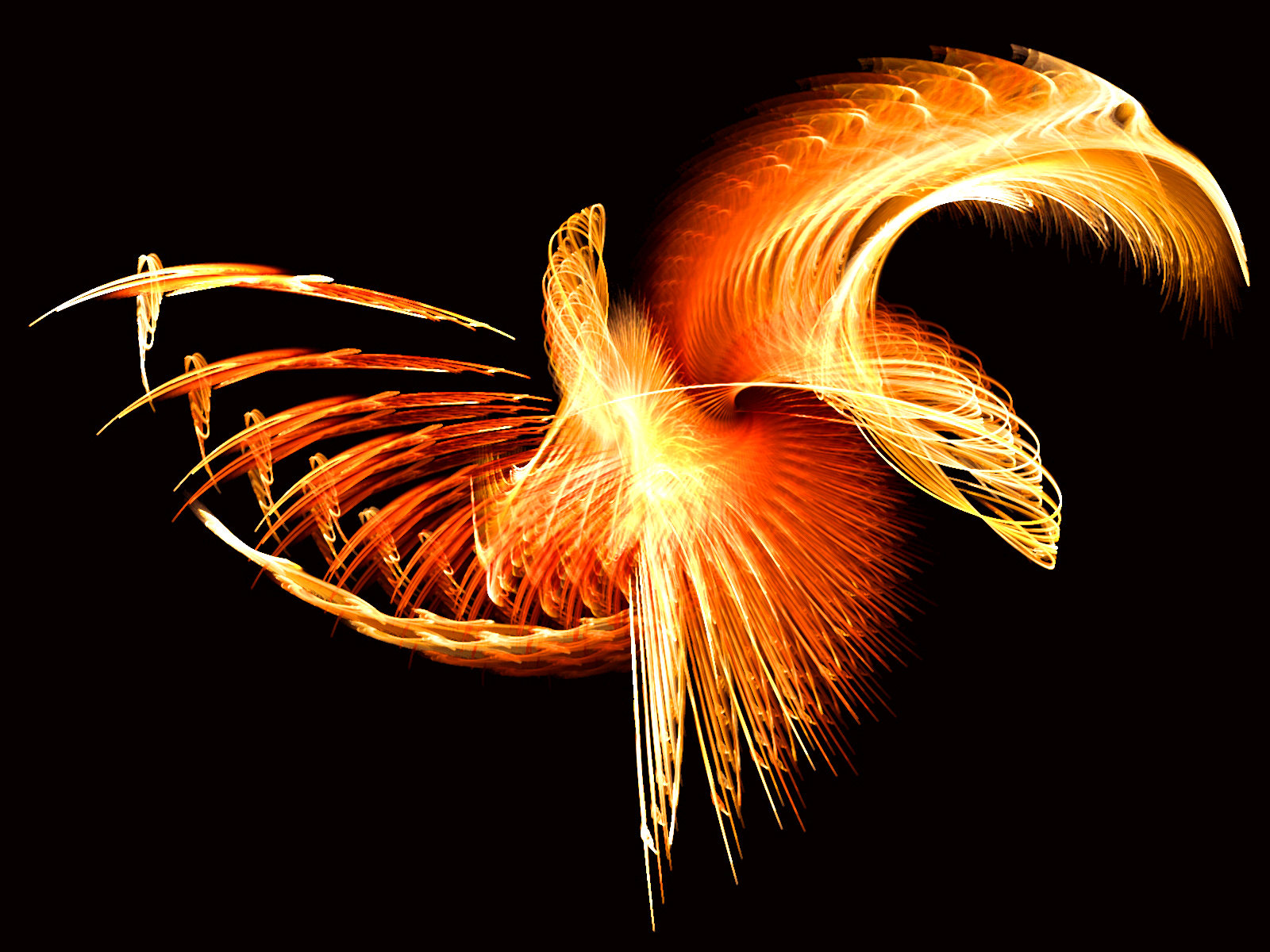 Wallpaper Graphic and Vector Phoenix Wallpapers 1600x1200