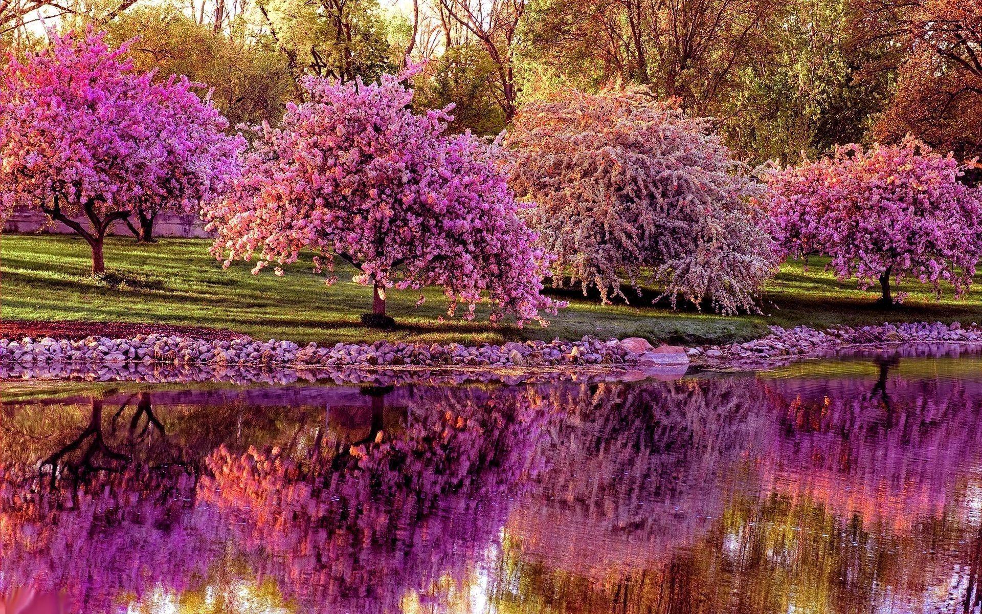 Spring Flower Gardens Wallpaper - WallpaperSafari