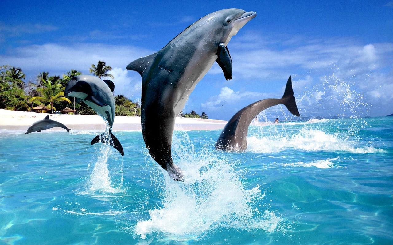 Dolphin HD Live Wallpaper   Android Apps on Google Play 1280x800