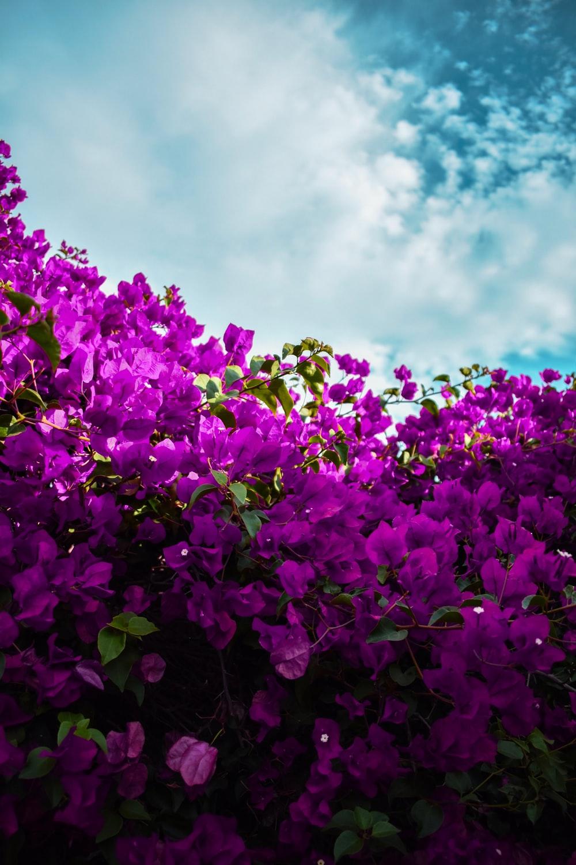 900 Purple Background Images Download HD Backgrounds on Unsplash 1000x1500