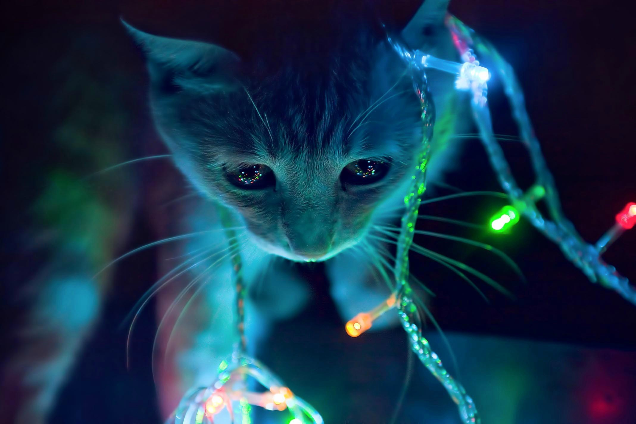 animated cat in winter christmas lights hd background christmas lights 2136x1424