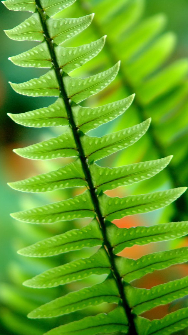 iPhone 5s wallpaper green nature   Best iPhone 5s wallpapers 640x1136