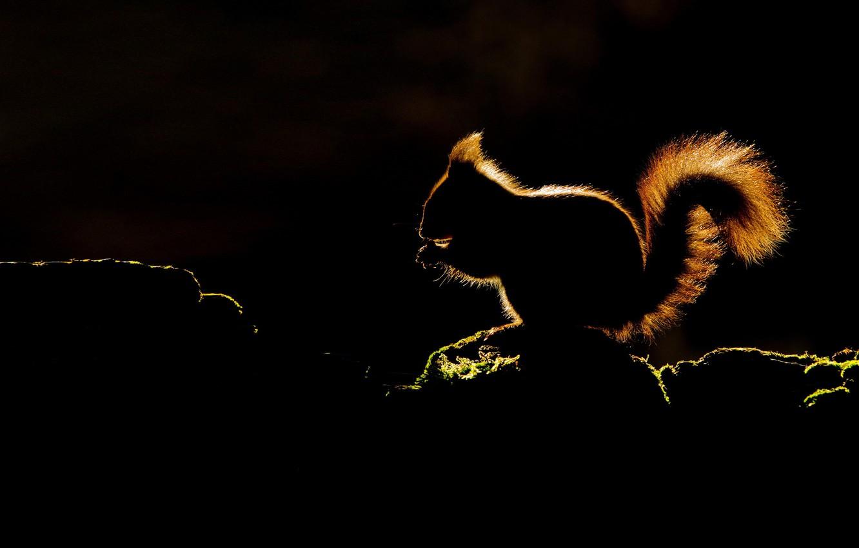 Wallpaper lighting silhouette protein images for desktop 1332x850