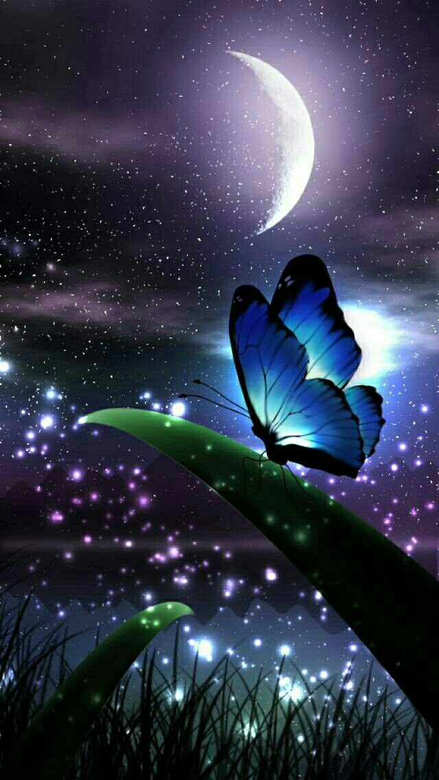 Butterfly Night BUTTERFLY in 2018 Pinterest Butterfly 640x1136