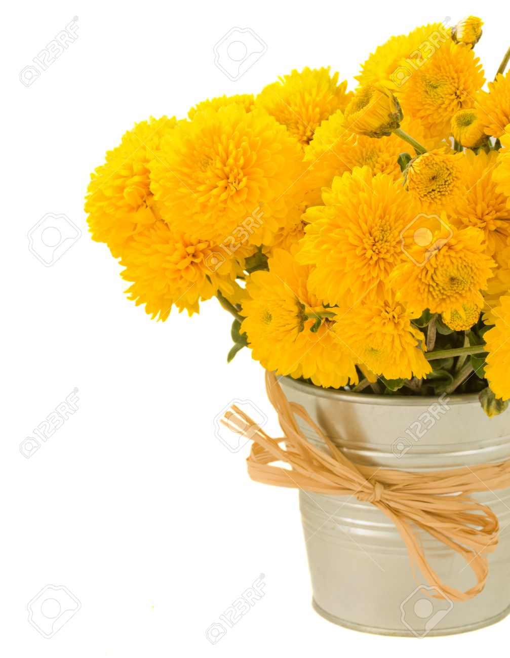 Bouquet Of Yellow Mums In Pot Close Up Isolated On White 1007x1300