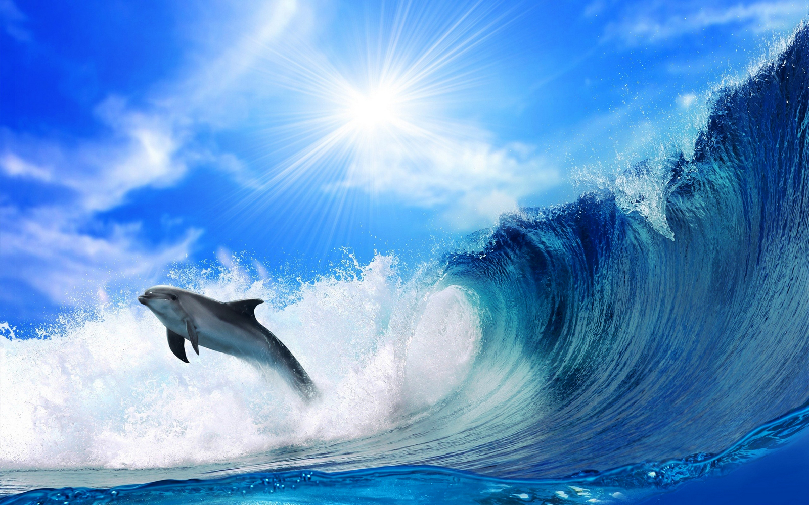 Cute Dolphins HD Wallpapers CollectionImage to Wallpaper 1600x1000