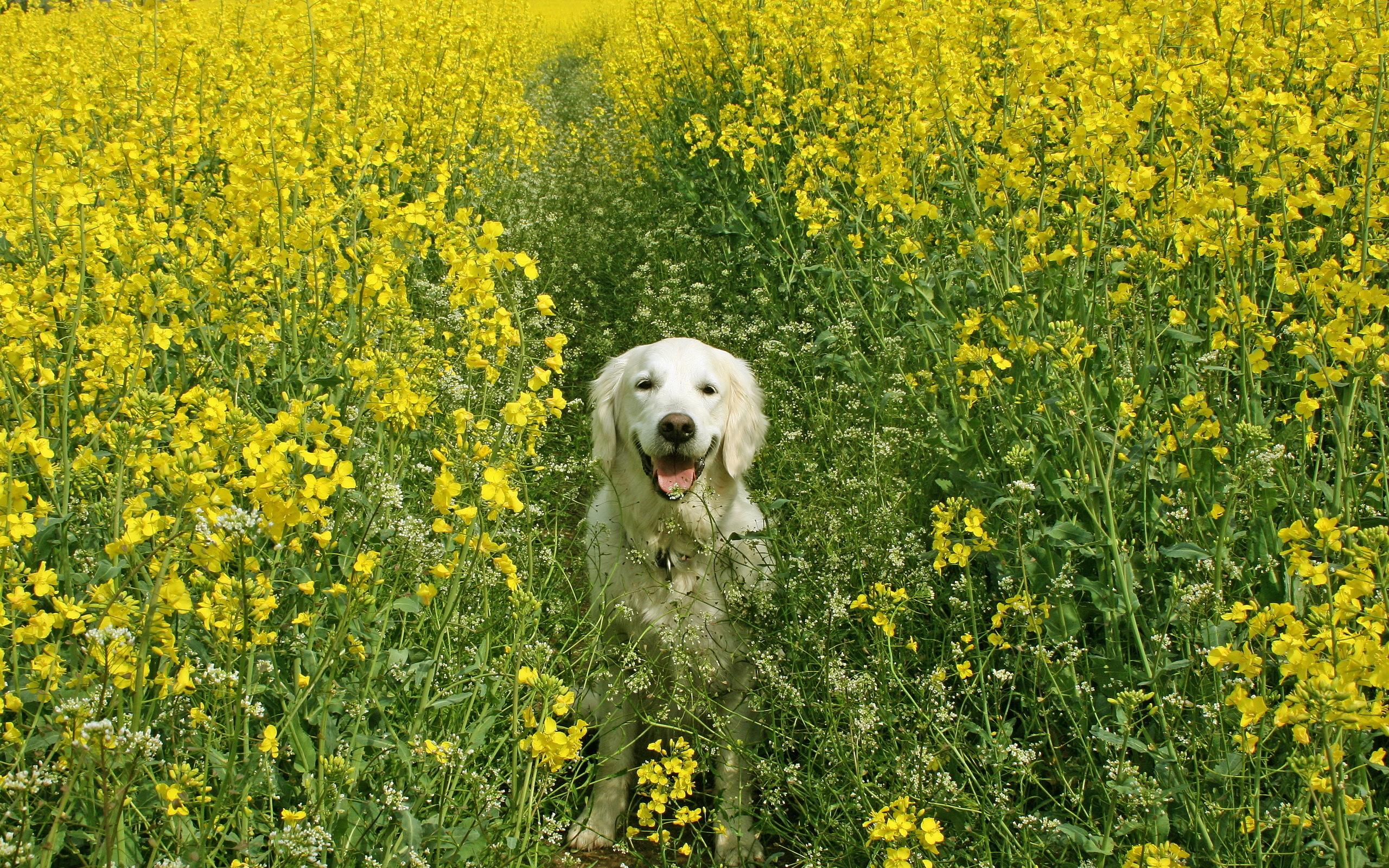 Spring dog wallpaper   ForWallpapercom 2560x1600