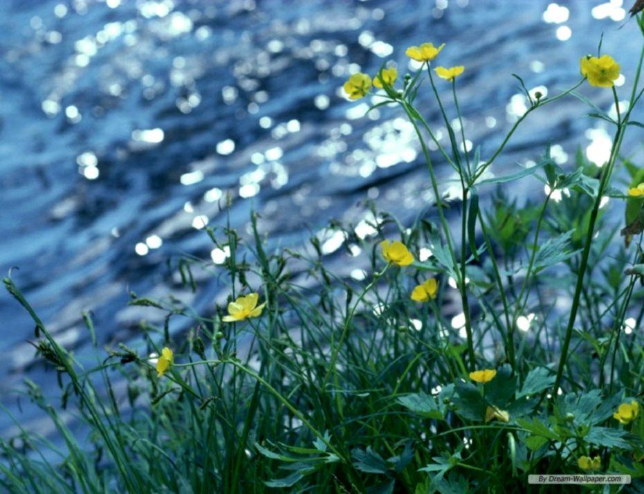Wallpaper Hd Nature Spring Screensaver Wallpapers 931x714