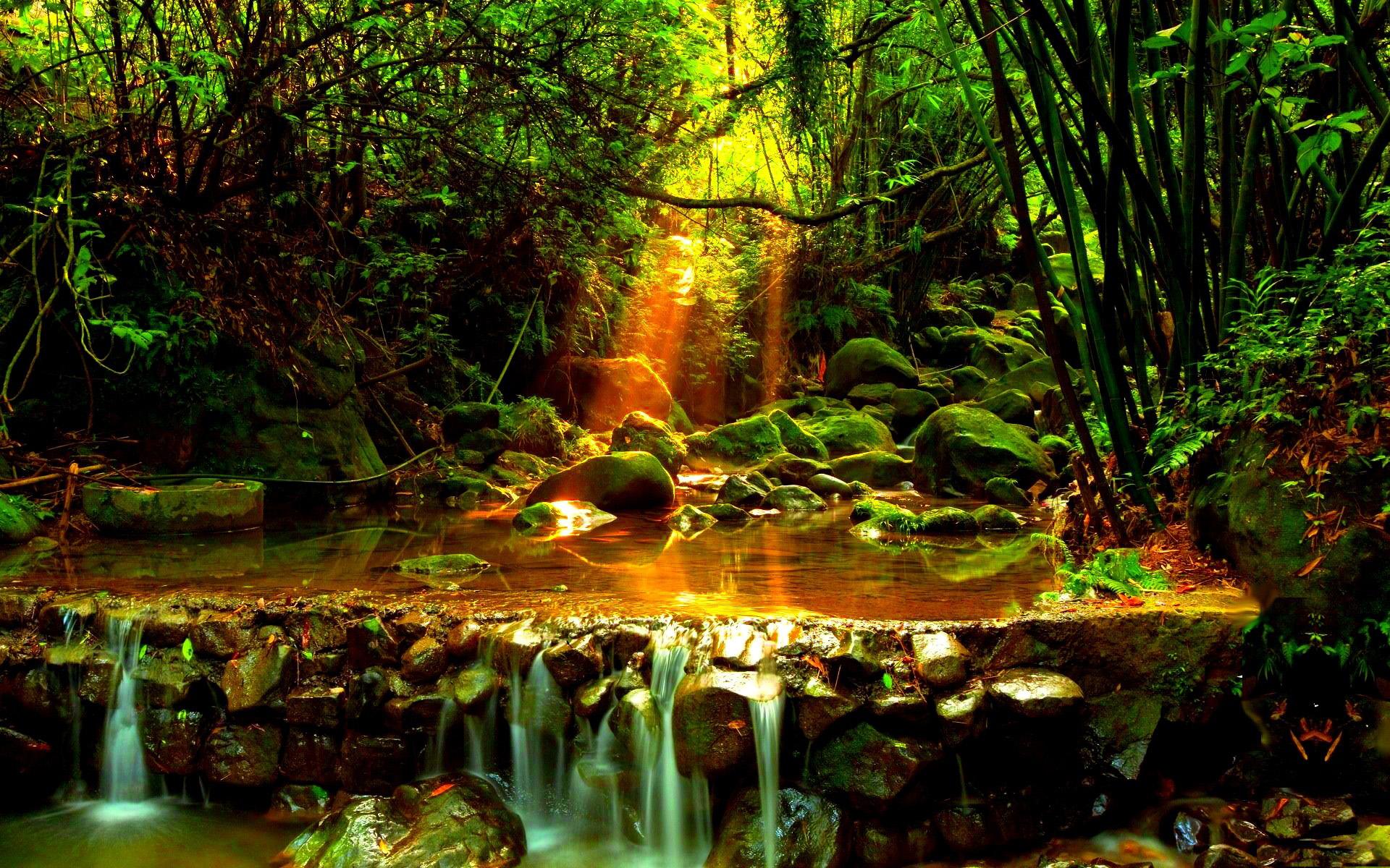 лесной ручей  № 1489924 загрузить