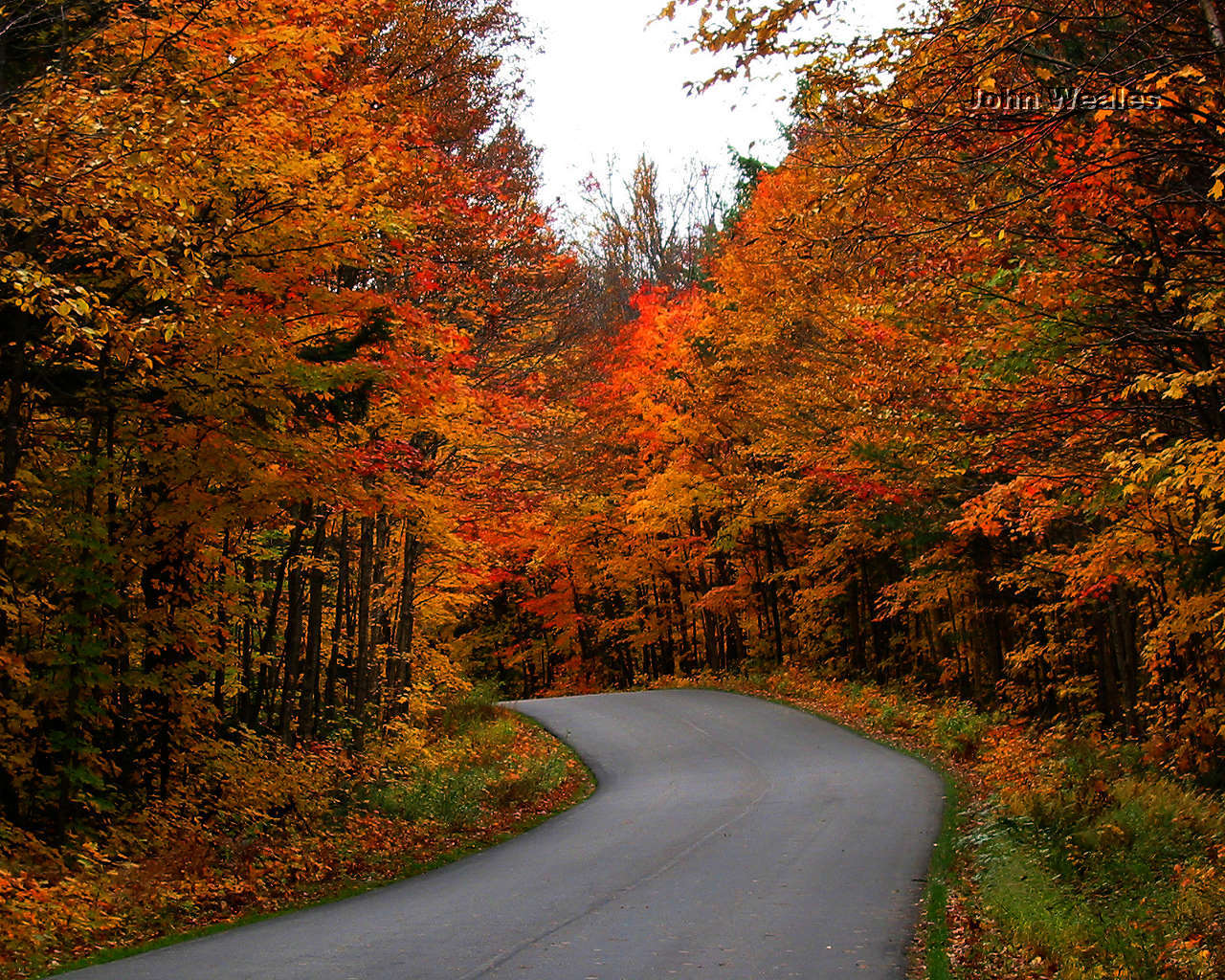 Autumn Leaves Live Wallpaper - Free downloads and reviews ...