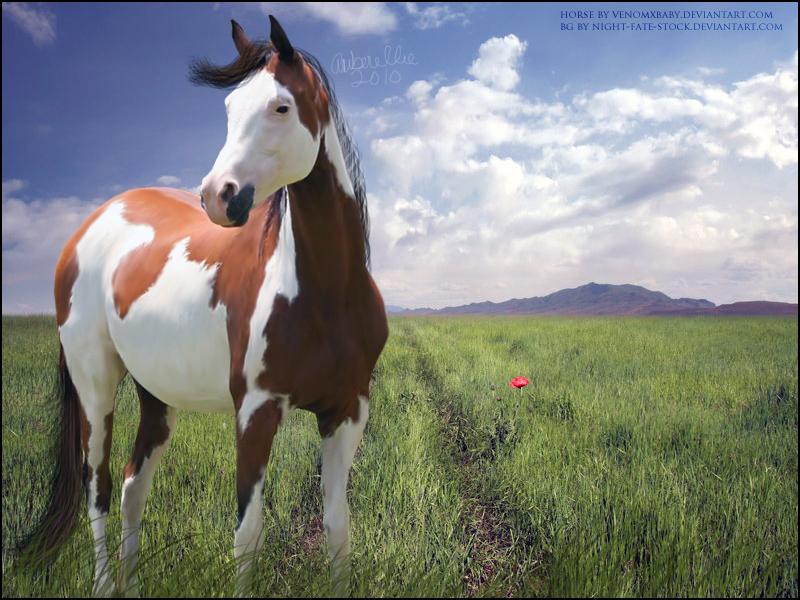 Paint Horse Wallpaper on WallpaperSafari