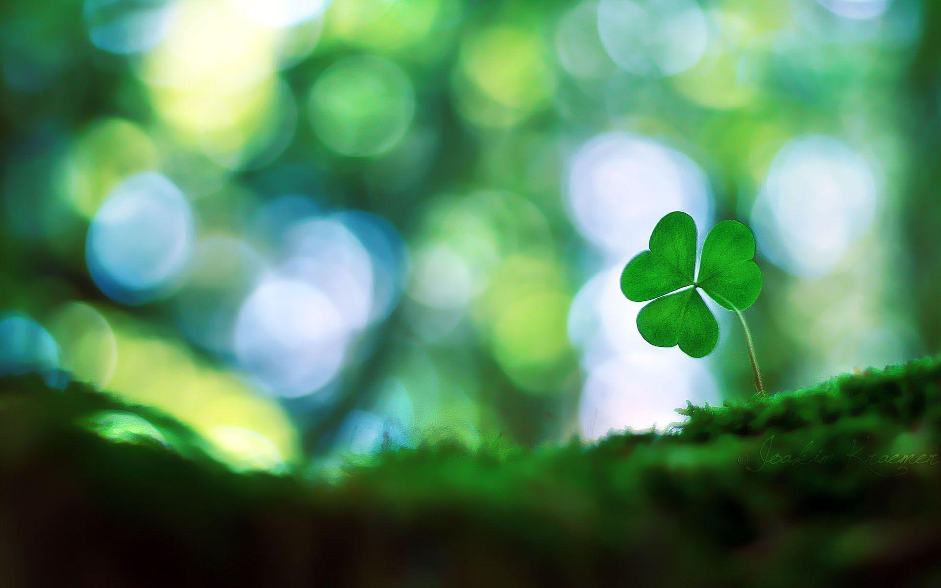 Four Leaf Clover Wallpapers 1920x1200