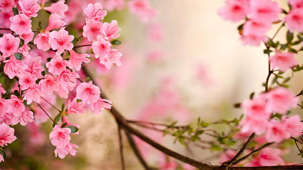 Spring Flowers Live Wallpaper   Android Apps on Google Play 1028x578