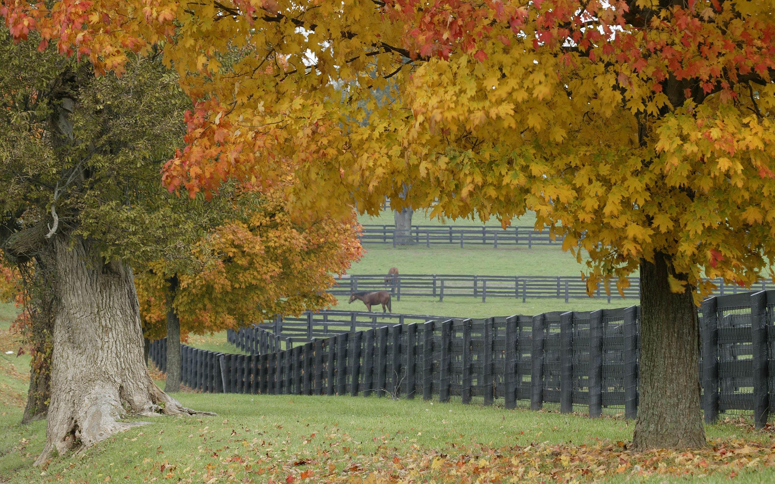 Horse farm wallpapers Horse farm stock photos 2560x1600