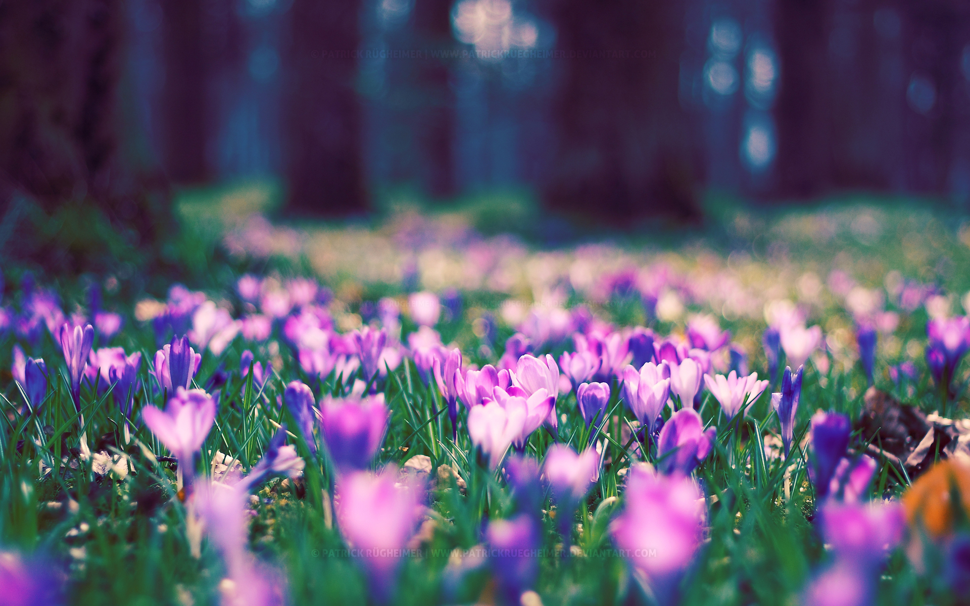 Spring Flower Park Facebook Covers Wallpapers HD 1920x1200