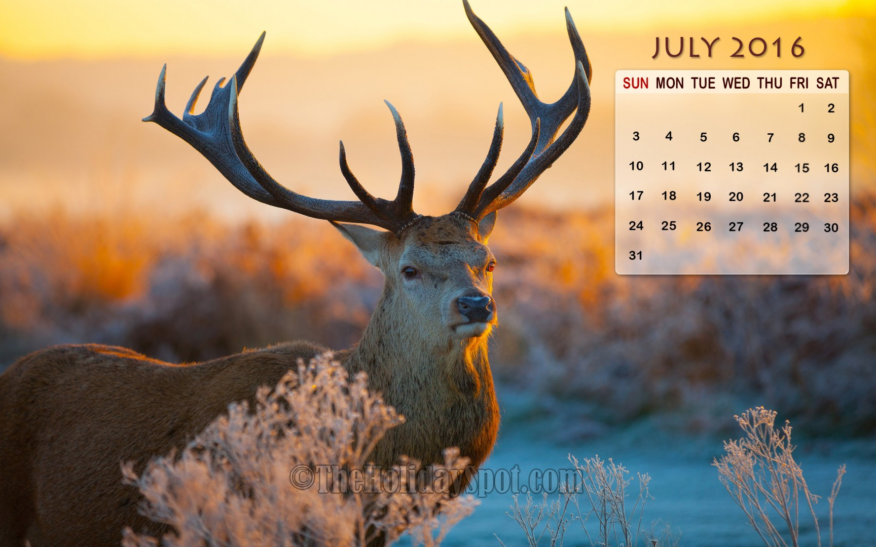 July Calendar Wallpaper 2016 1728x1080