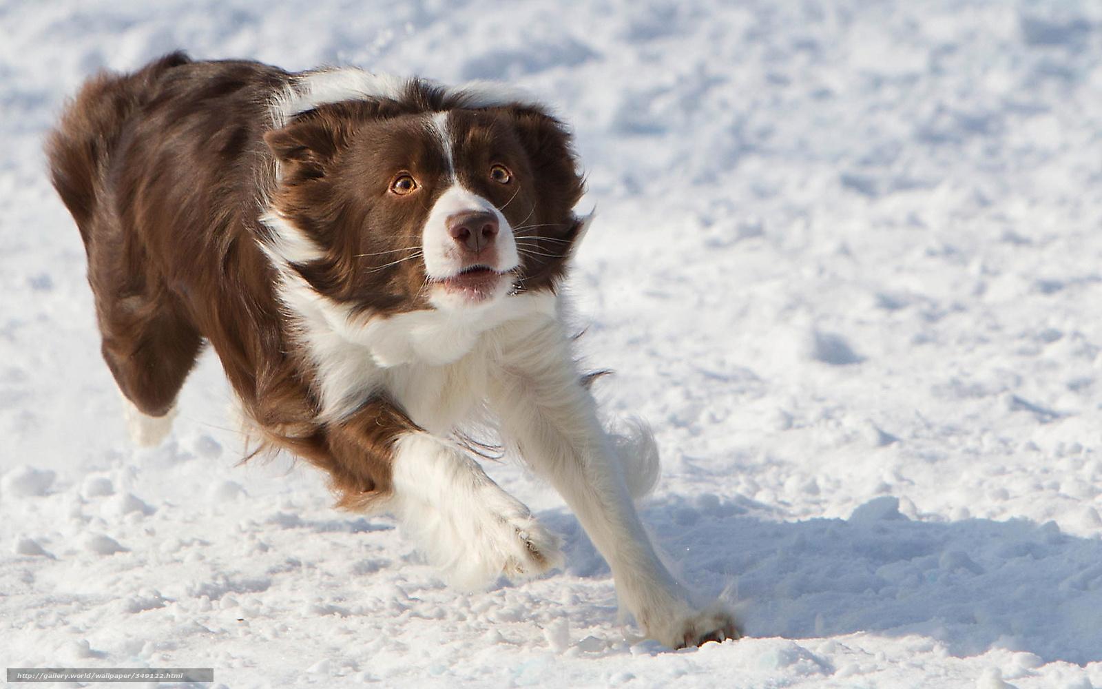 Download wallpaper dog, Frisbee, Winter free desktop wallpaper in the ...