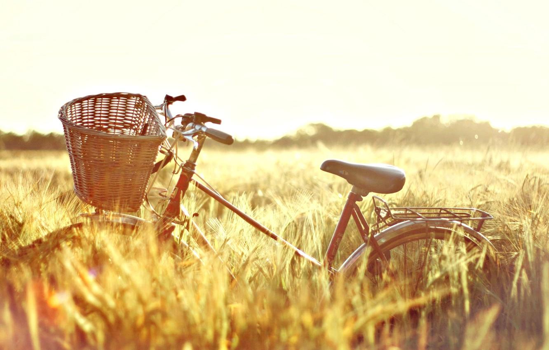 Wallpaper wheat field the sun nature bike background 1332x850