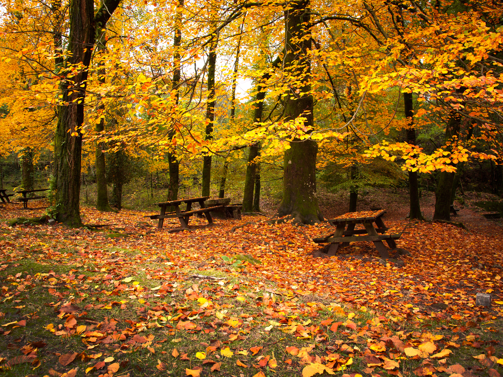 Leaves Wooden Benches Autumn HD Wallpaper HD Nature Wallpapers 1600x1200