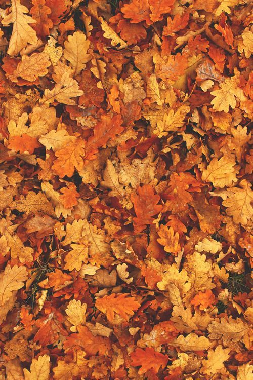 fall wallpaper backgrounds tumblr wallpapersafari