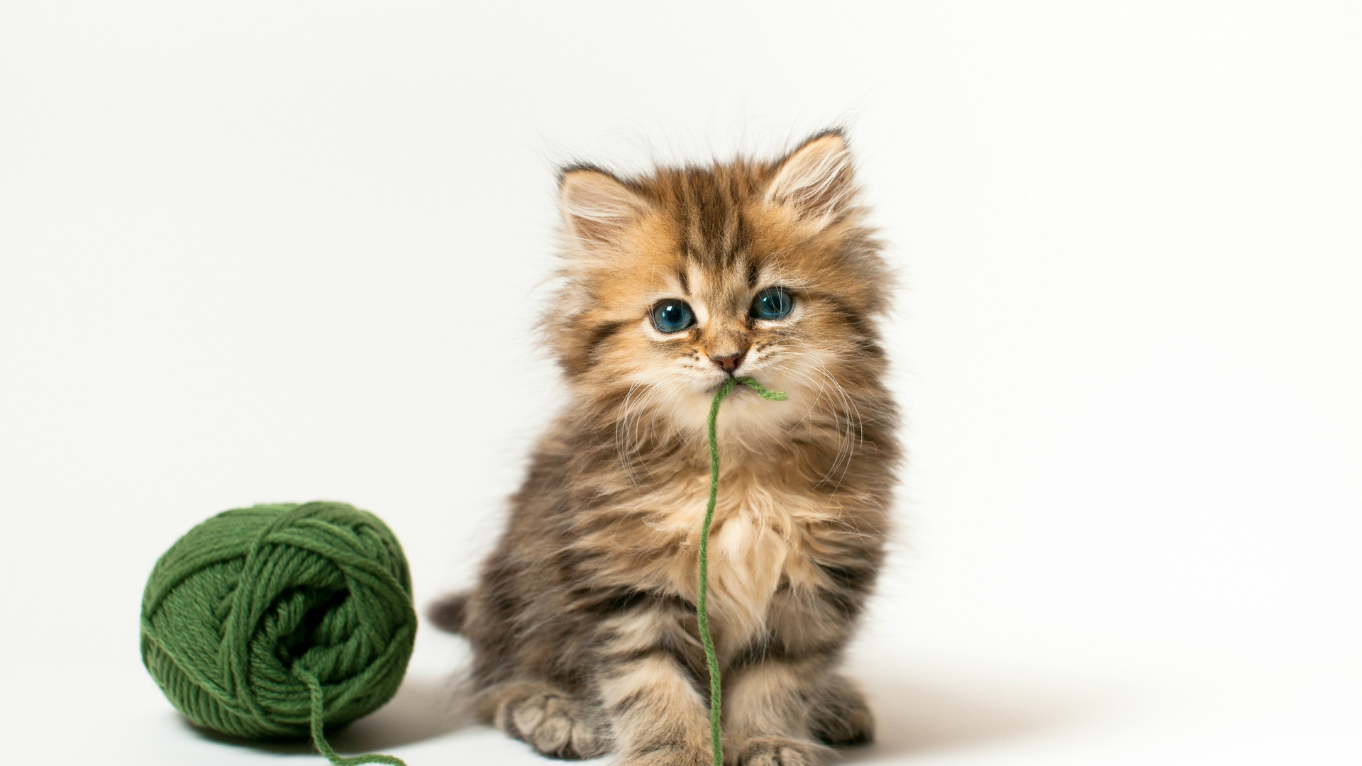 Really Cute Backgrounds Desktop Image 1920x1080