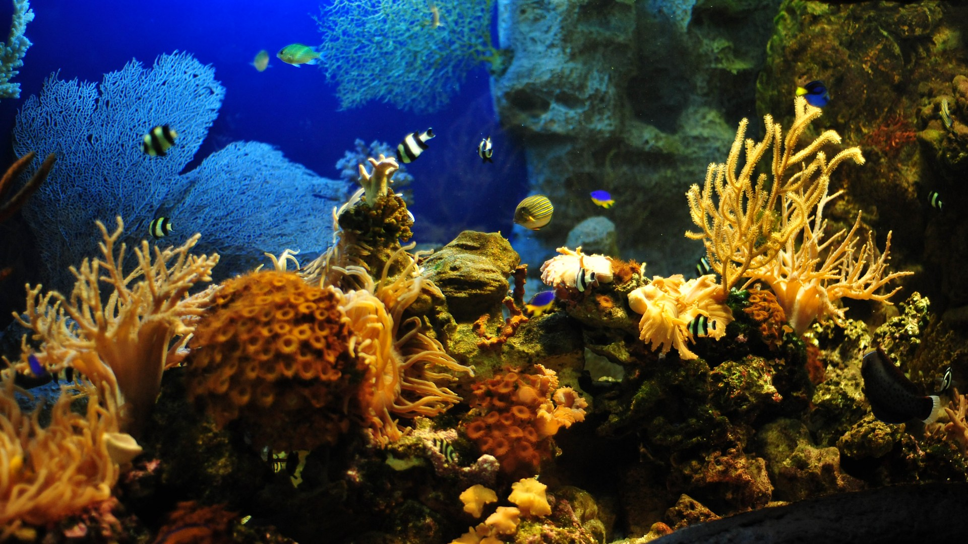 Aquarium screensaver fish tank 1080p hd - Hd Wallpapers 1080p Aquarium Best Hd Wallpapers
