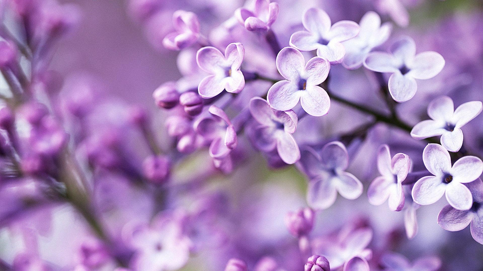 <b>Lavender</b> Flower Tumblr <b>Wallpaper Background</b> : Flower <b>Wallpaper</b> ...