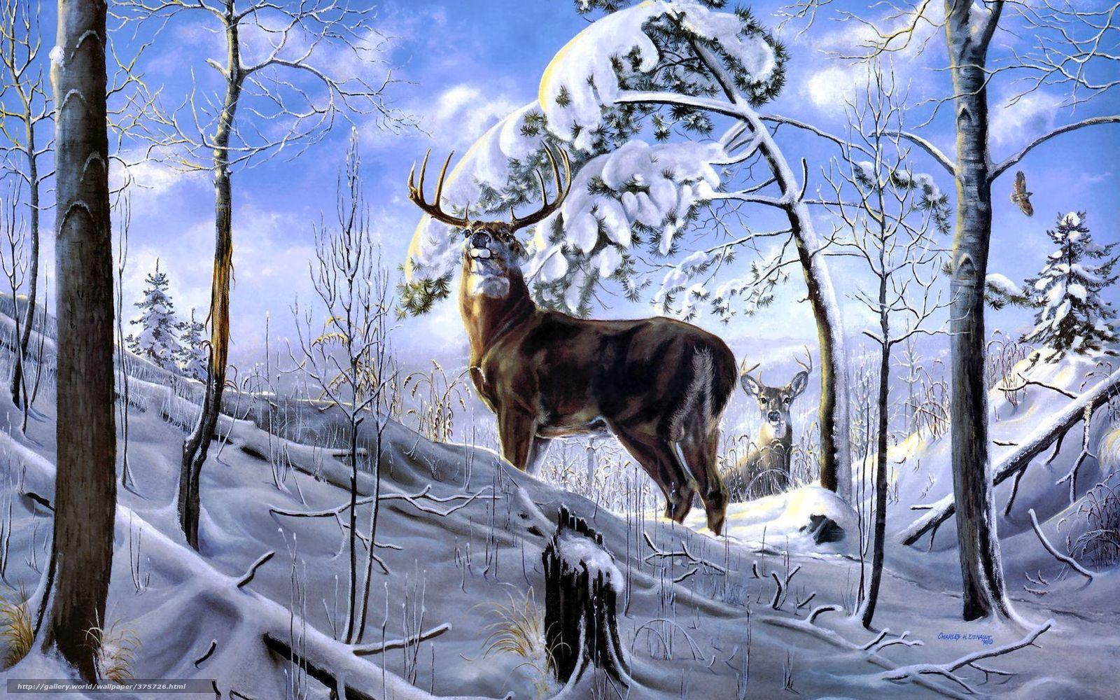 Download wallpaper Deer Winter forest snow desktop 1600x1000