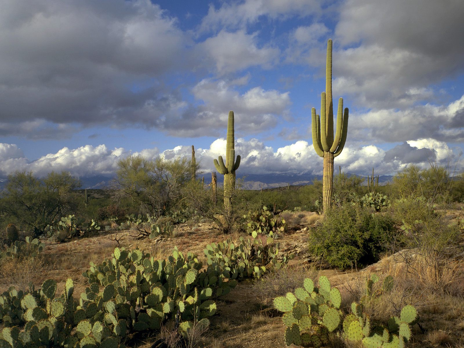 Saguaro Park wallpapers Saguaro Park stock photos 1600x1200