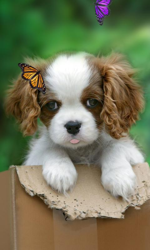 Cute puppy live wallpaper Android Apps on Google Play 480x800