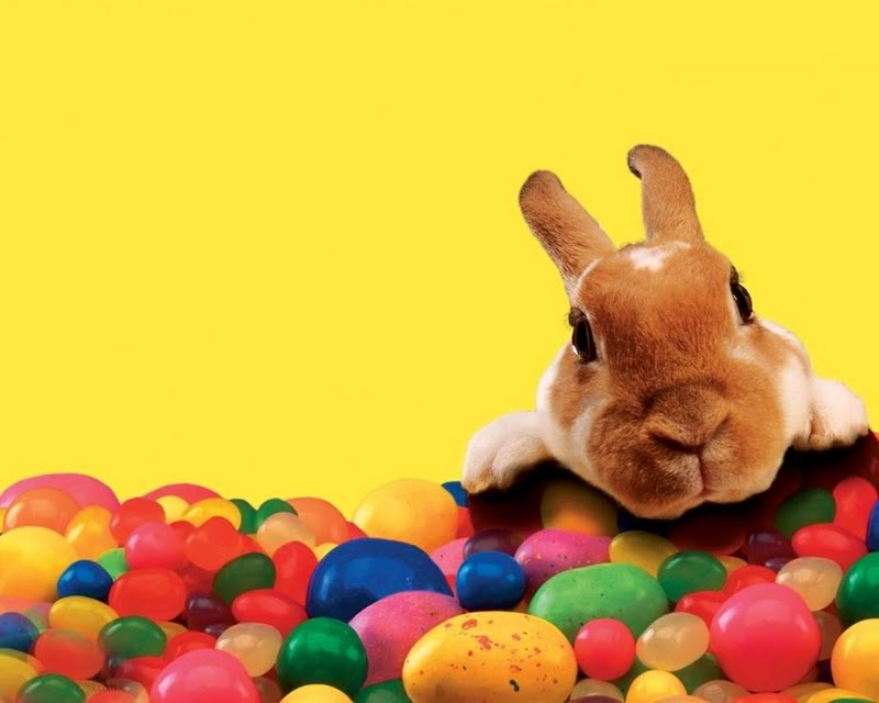 Free Download Easter Bunny Wallpapers Easter Bunny Wallpaper