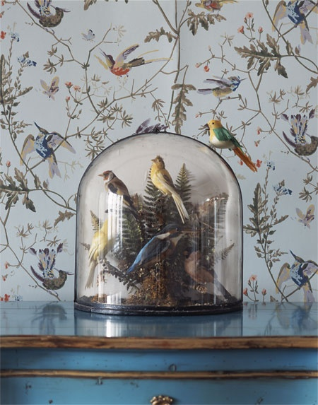 Cole Son Hummingbirds wallpaper Wall Inspiration Pinterest 450x573