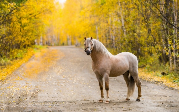 Road Horse Autumn click to view 620x390