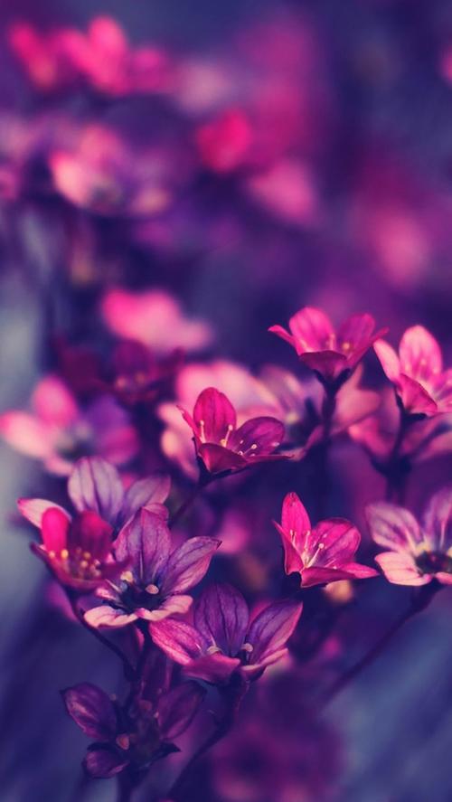 ios 8 wallpaper flower purple   Wallpapers 500x887