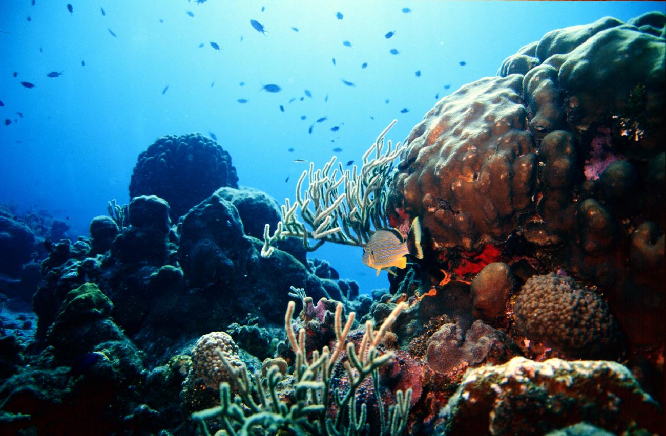 Reef Calendar Wallpaper : Miss reef wallpaper wallpapersafari