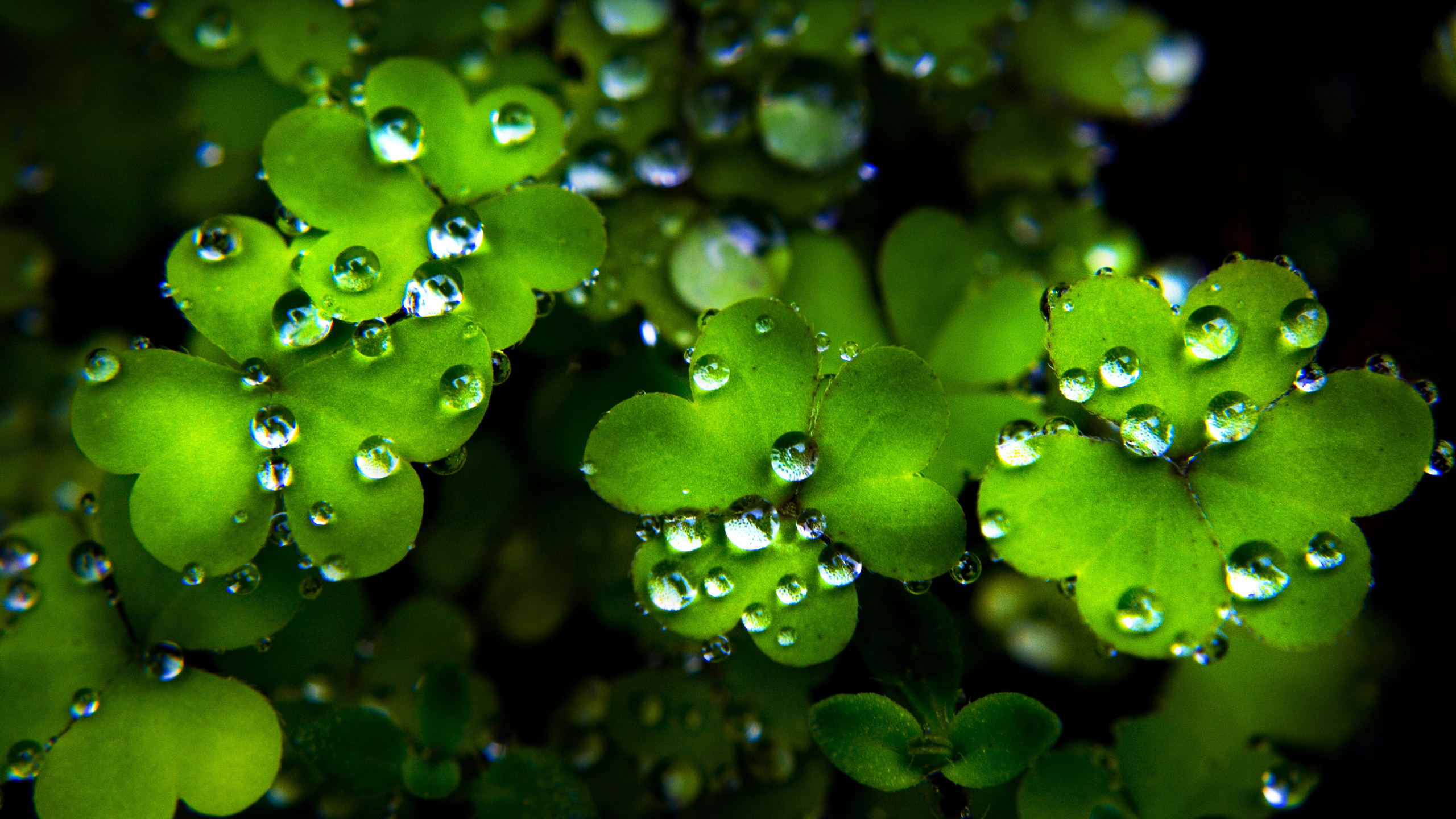 Happy St Patricks Day   Wallpaper High Definition High Quality 2560x1440