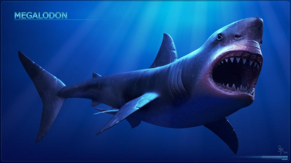 1000px Megalodon Giant Megalodon Shark Wallpapers HD 1000x563