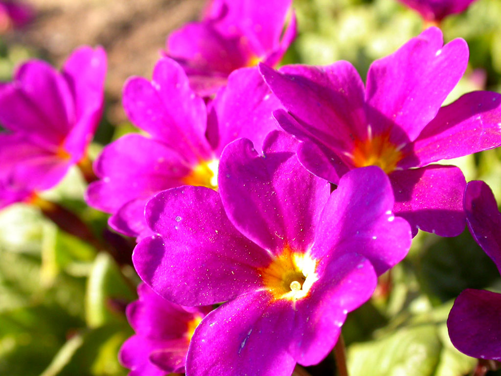 Free Colorful Flower Wallpaper Downloads: [72+] Colorful Flowers Wallpaper On WallpaperSafari