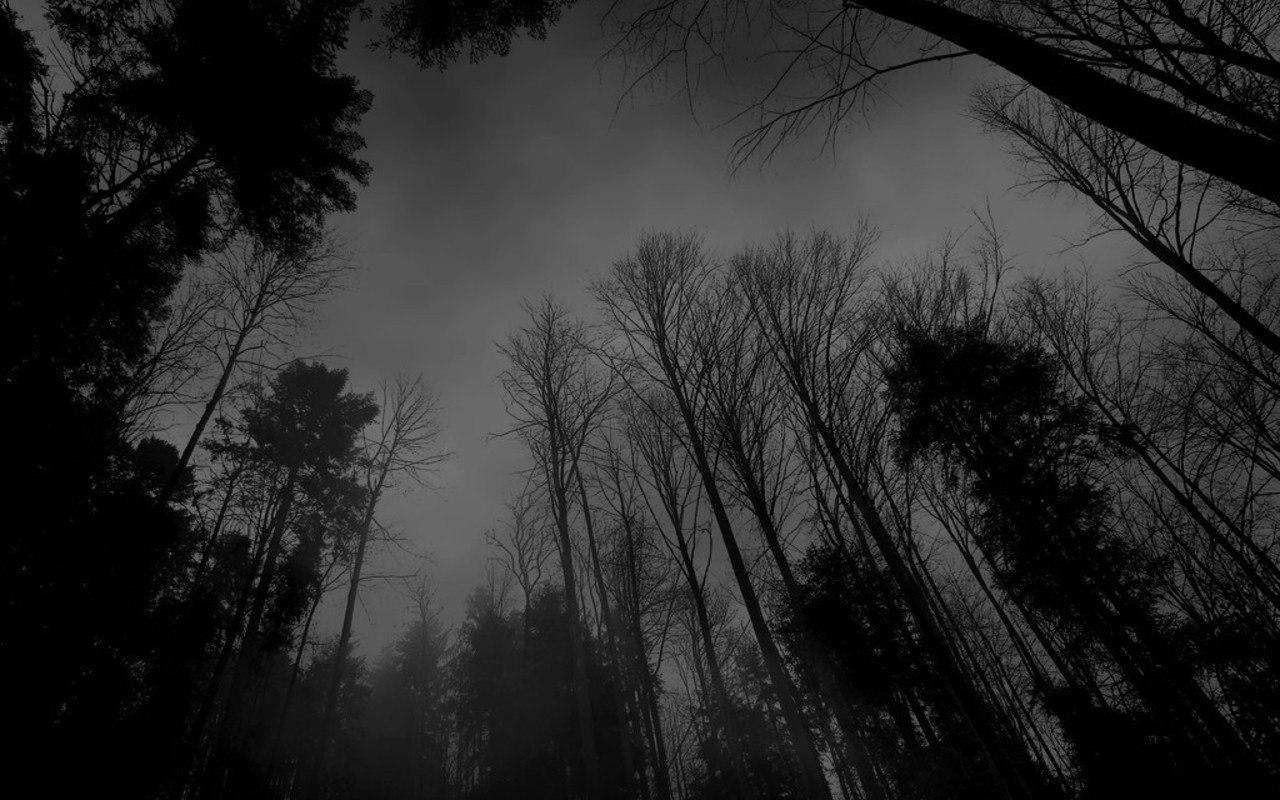 1280 x 800 wallpapers wallpaper 18162 forest black white darkjpg 1280x800