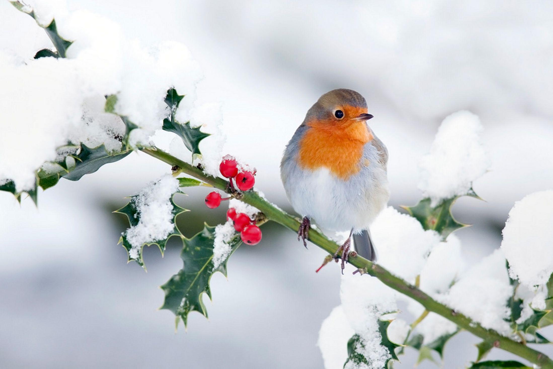 птички на снегу  № 101402  скачать