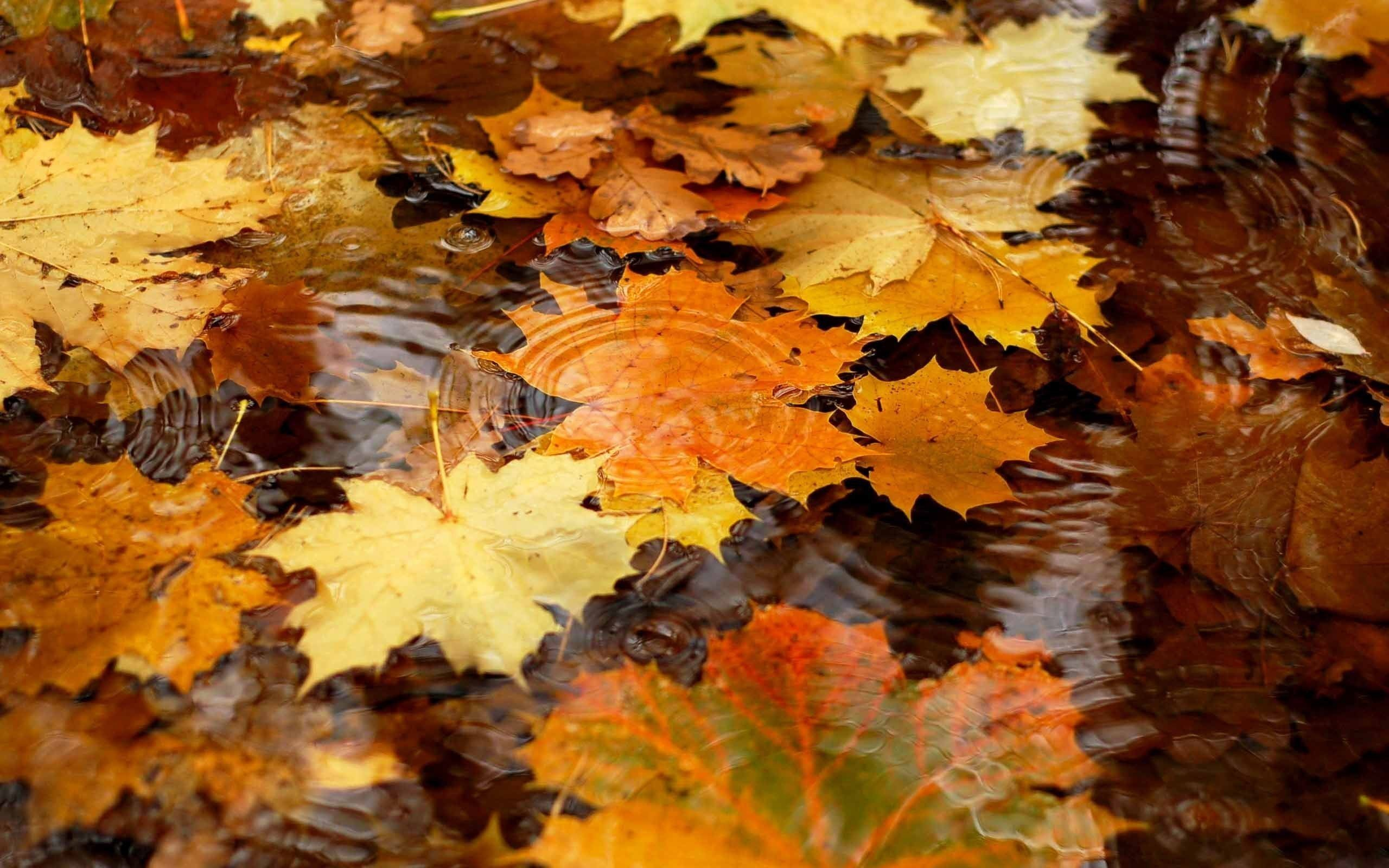 Fall Wallpapers for Computers 53 images 2560x1600