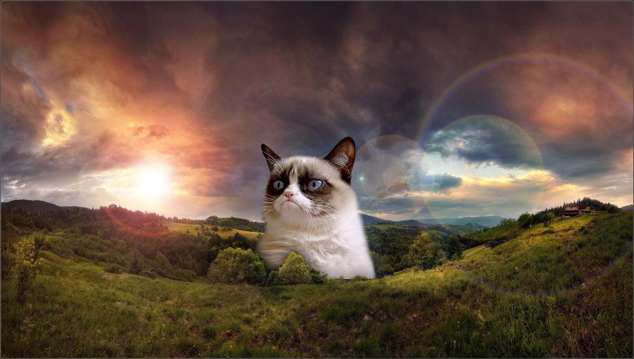 Grumpy Cat Meme Wallpaper - WallpaperSafari