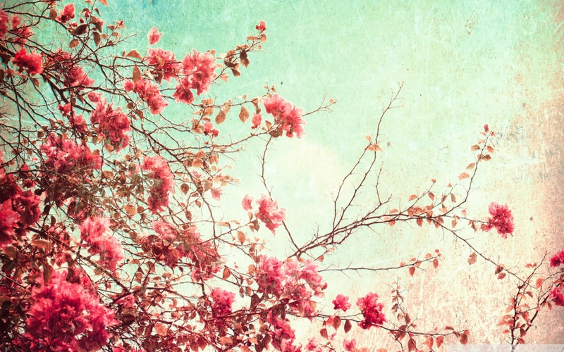 Tumblr Backgrounds Spring 800x500