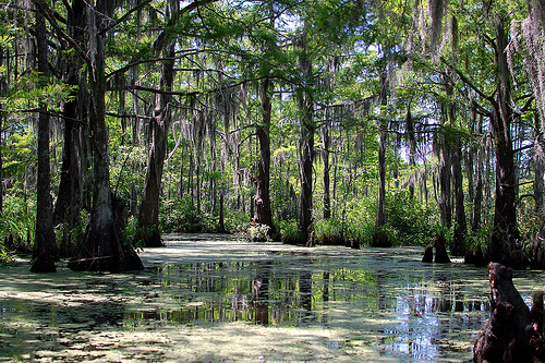 Honey Swamp   My new desktop wallpaper background Flickr   Photo 500x333