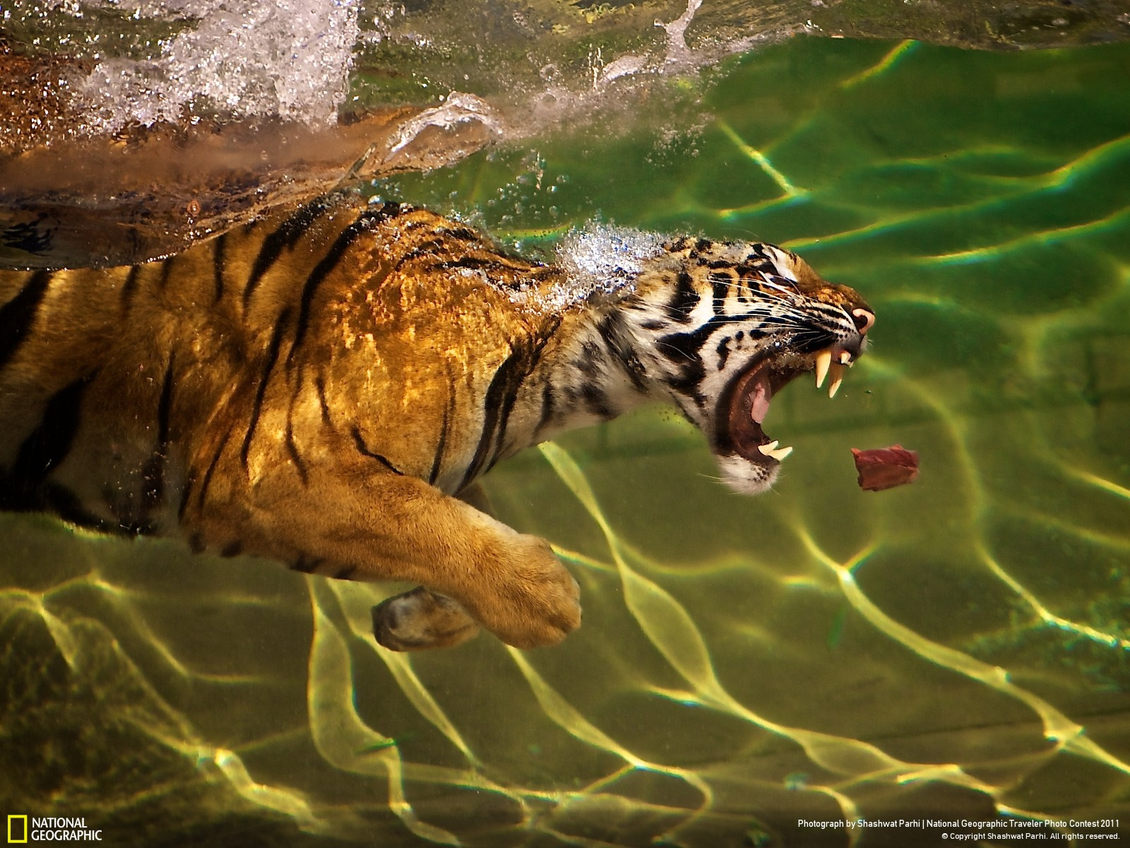 National Geographic Best Nature Photos Under